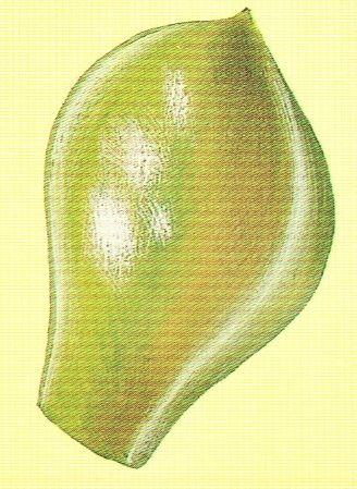faskovirozsa6.jpg